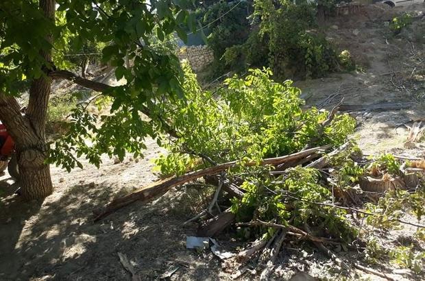 Kuvvetli rüzgar, elma bahçesine zarar verdi