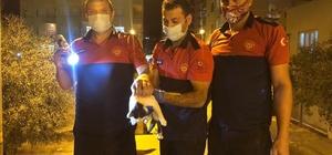 Otobüsün klima motoruna sıkışan kediyi itfaiye kurtardı