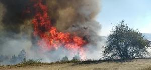 Kastamonu'da 1 hektarlık ormanlık alan yangında zarar gördü