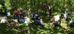 Artvin'de İmece usulü fındık toplama etkinliği