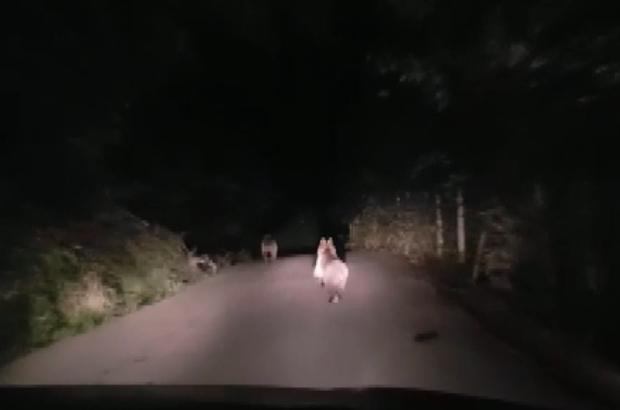 Otomobille ayıları köye kadar takip ettiler
