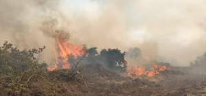 Bingöl'de 2 bölgede orman yangını