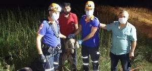Niğde'de 3 gündür su kuyusunda mahsur kalan köpeği AFAD kurtardı
