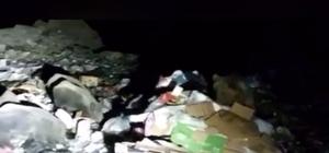 Aç kalan ayı ve yaban domuzu çöplüğü mesken tuttu