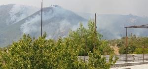 Suriye sınırındaki orman yangını sürüyor