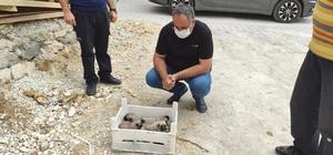 Gözleri açılmamış yavru köpekler, kasa ile ölüme terk edildi Elazığ'ın Ağın ilçesinde kasa içerisinde ölüme terk edilen yavru köpekleri, belediye personelinin fark etmesi ve ilçe belediye başkanının talimatıyla korumaya alındı