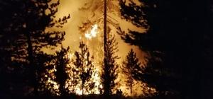 Bolu'da orman yangını: Çok sayıda ekip müdahale ediyor