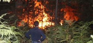 Bolu'da, orman yangını 5 saatte kontrol altına alındı Orman yangınında 20 dönümlük alan zarar gördü Köylüler alevlere karşı kazma ve küreklerle mücadele etti