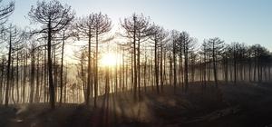 200 hektarlık alan karalara büründü Orman yangını sonrası ortalık savaş alanlarını andırdı