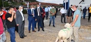 Karabük'te 89 koç yetiştiricilerine verildi