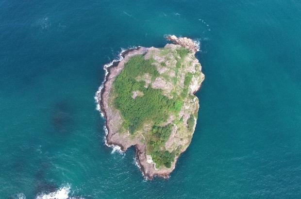"""Ordu'nun kuş cenneti: """"Hoynat Adası"""" 90 çift tepeli karabatak ile 250 çift gümüş martının yaşadığı ada, ziyaretçi akınına uğruyor"""