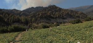"""Alevlerin arasında 'hasat' telaşı Hatay'da 5. gününe girilen orman yangınında, çiftçilerde zor koşullarda çalışmalarını sürdürüyor Çiftçi Orhan Kaymakçı: """"Alevler hasadımızı da etkiledi, ürün alamaz olduk"""""""