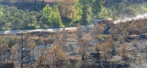 Hatay'daki orman yangını sonrası üzücü görüntüler Bölgedeki ormanda daha önce dağ ceylanlarını, alaca sansarları, kara kamlumbağalarını ve tilkileri fotoğraflayan Doğa  fotoğrafçısı Meriç Aktar, burada artık eskisi gibi fotoğraf çekemeyecek olmanın üzüntüsünü yaşıyor
