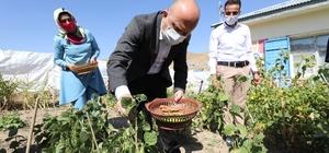 Ağrı Valisi Dr. Osman Varol, Dağlıca Köyü İlköğretim Okulu'nu ziyaret etti, öğrencilere hediye verdi Vali Varol ziyaretleri esnasında köy öğretmenlerinin kendi imkanlarıyla oluşturdukları sebze ve meyve bahçesinde yetişen ürünlerden topladı