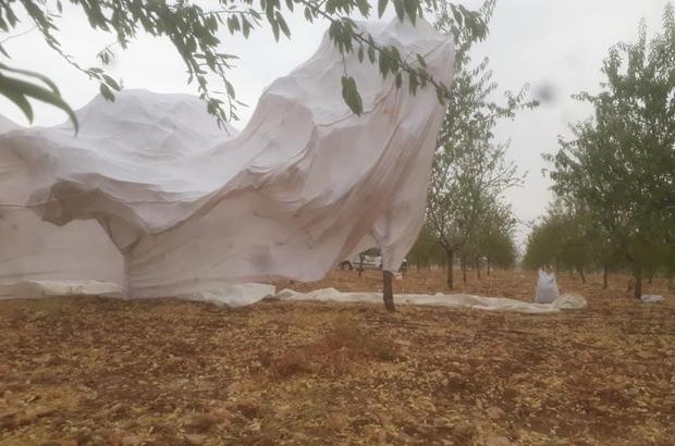 Şiddetli rüzgar çiftçilere zor anlar yaşattı