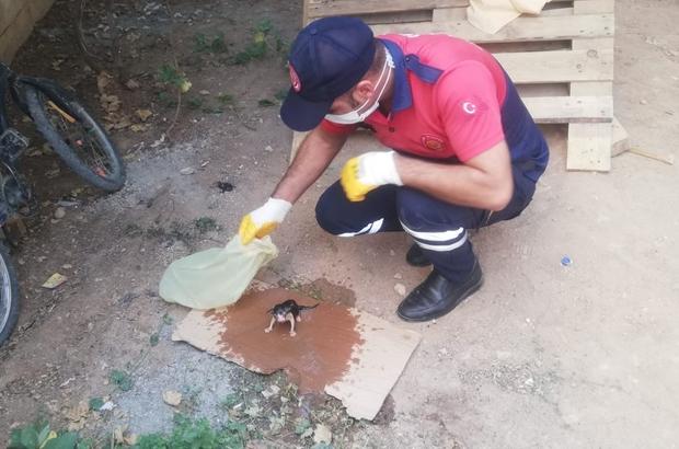 Rögarda sıkışan yavru kediyi itfaiye ekipleri kurtardı
