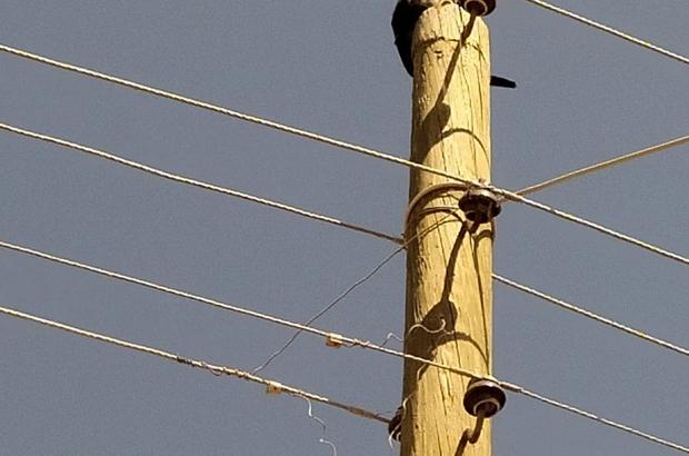 Elektrik direğinde mahsur kalan kedinin yardımına itfaiye yetişti