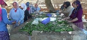 Kahramanmaraş'ta 200 bin ton salatalık üretiliyor İkinci ürün olarak hasadı yapılan salatalık çiftçinin yüzünü güldürdü