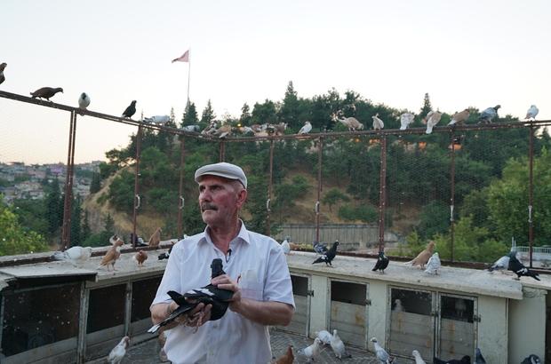 """Pandemi dönemini güvercinleriyle geçiriyor 60 yaşındaki Hacı Akpolat: """"Gidecek yerimiz yok, buraya geliyoruz"""""""