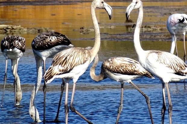 Pek çok kuş ve bitki türünü barındıran Alaçatı Sulak Alanına bilgilendirme panoları Panolar, çevreye karşı duyarlı ve etkin bir toplumsal bilincin oluşturulması için önemli bir rol oynayacak