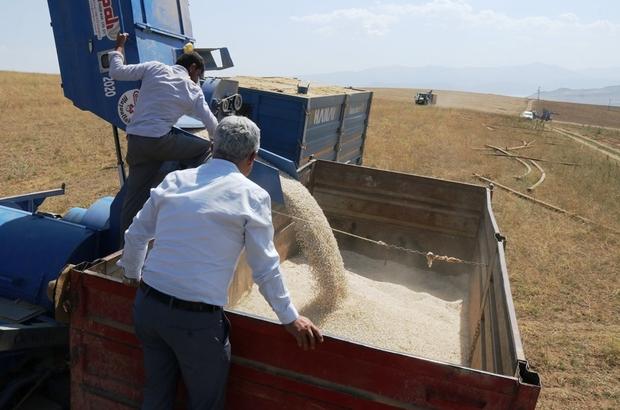 Bitlis'ten 61 şehre fasulye satışı Fasulyeden bu yıl 230 milyon TL gelir elde edilmesi bekleniyor