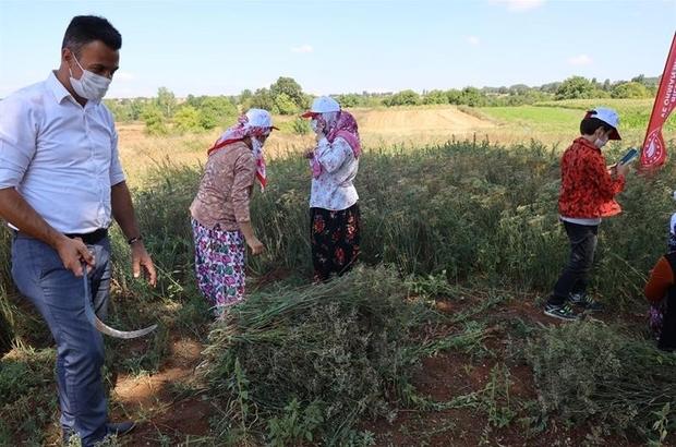 """Bilecikli kadınlar rezene üretiyor Bilecik İl Tarım ve Orman Müdürü Necmettin Yoldaş """"Büyük ilgi toplayan eğitim, farklı köylerden 26 kadın çiftçi ve teknik personeller katılım sağladı"""" """"İlimiz tarımına katkı sağlayacak, yeniliklere açık, kadın çiftçilerimize desteğe hazırız"""""""
