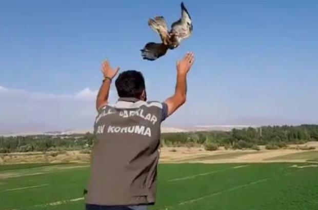 Tedavileri tamamlanan kuşlar doğaya bırakıldı