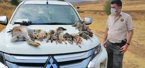 Usulsüz avlanan  avcılar yakayı ele verdi Sivas'ta 11 avcı hakkında işlem yapılarak usulsüzce avladıkları 35 keklik, bıldırcın ve bir yaban tavşanına el konuldu.