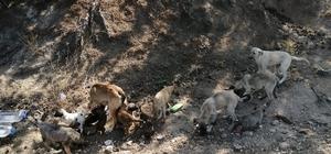 Çevre ilçe ve beldelerden toplanan sokak köpekleri Doğanlar köyüne bırakılıyor Doğanlar köyü sakinleri sayıları hızla artan köpekler için tedbir alınmasını istiyor