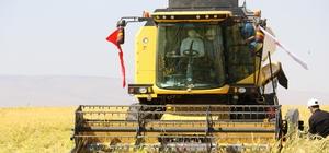 Diyarbakır'da tescilli Karacadağ Pirinci hasadı başladı