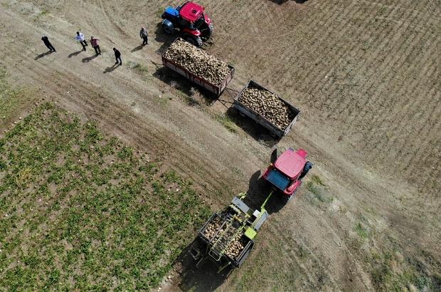 Elazığ'da çiftçiler şeker pancarı mesaisinde Şeker fabrikasının pancar alım kampanyasını başlatmasıyla birlikte tarlalarda pancar hasadına start veren çiftçiler, emeklerinin karşılığını almanın mutluluğunu yaşıyor