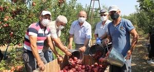 """Isparta'da elma hasadı başladı Türkiye'de yetişen her 4 elmadan biri Isparta'da üretiliyor Isparta Ziraat Odası Başkanı Selçuk: """"Bu yıl yaklaşık 1 milyon ton rekolte bekliyoruz"""" Gelendost Belediye Başkanı Mehmet Sezgin: """"Rekolte ve kalite olarak bir numarayız"""""""
