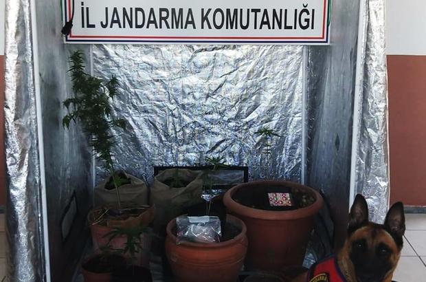 Kenevir üretimi için özel kabin Muğla'nın Seydikemer ilçesinde Jandarma İstihbarat ekipleri tarafından kenevir yetiştirmek için kurulan özel kabin ele geçirildi