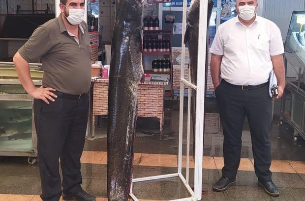 Kahramanmaraş'ta 2 metrelik balık yakalandı