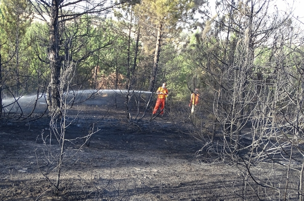 Kütahya'daki orman yangını kontrol altına alındı Yangından 2,5 hektarlık alan zarar gördü