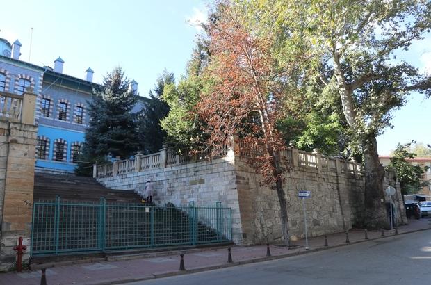 """Kütahya'da """"Çınar ağaçlarının yaşı"""" tartışması"""
