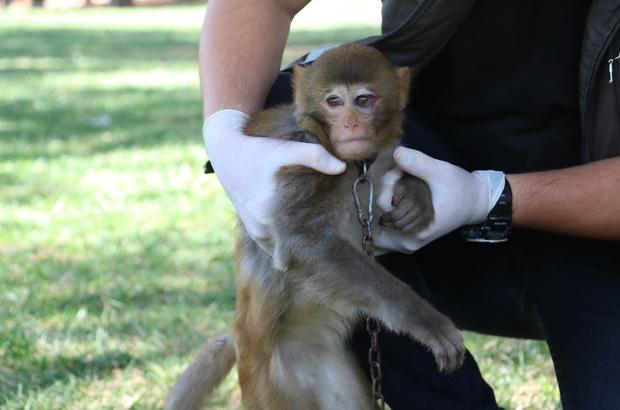 Durdurulan araçtan Makak maymunu çıktı