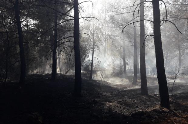 Ormanı ateşe veren kundakçı kısa sürede yakalandı 2 hektar ormanlık alanın hasar gördüğü yangını çıkartan şüpheli kısa sürede yakalandı