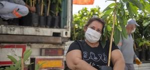 Mersin Büyükşehir Belediyesinden üreticilere 3 bin 250 avokado fidanı
