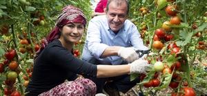 Mersin'de tarım kalkınıyor, üretici kazanıyor Mersin Büyükşehir Belediyesince, kent tarımının geliştirilmesi ve üreticinin desteklenmesi amacıyla tarım ve hayvancılık alanında üreticiye katkı sağlanıyor