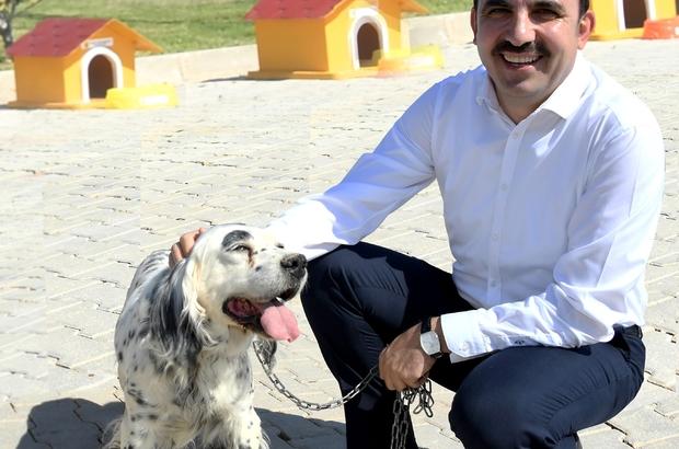 """Başkan Altay: """"Sokak hayvanları için örnek çalışmalar yürütüyoruz"""""""