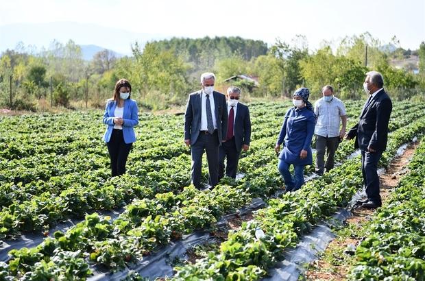 """20 dekarda başlayan çilek üretimi 200 dekara ulaştı Isparta İl Tarım ve Orman Müdürü Adıgüzel: """"Aksu yayla çileği bir marka haline geldi"""""""
