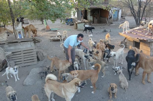 Sahibi ölen 70 köpeğe yuva aranıyor