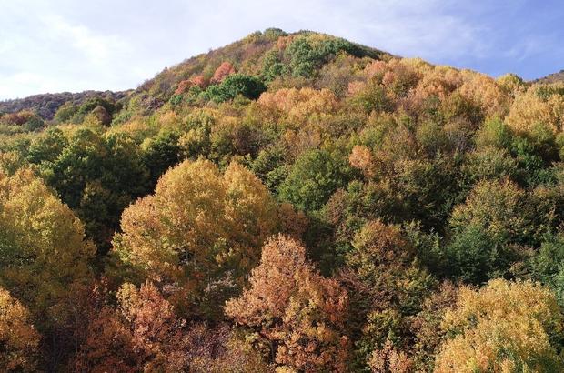 Rengarenk görüntüsüyle adeta büyülüyor Dipsiz Göl Şelalesi sonbaharın gelmesi ve ağaçların yapraklarının rengarenk olmasıyla doğa severlere eşsiz bir manzara sunuyor