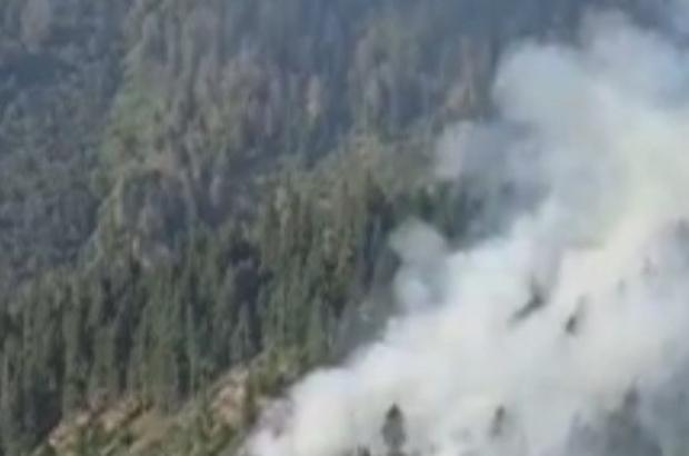 Örümcek Ormanları'nda yangın
