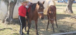 11 yaşında at binip, engeller üzerinden atlıyor Küçük Sudem'in at sevgisi görenleri imrendiriyor Çok sevdiği ata önce koşmayı, sonra da kasaların üzerinden atlamayı öğretti