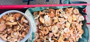 Denizli'de vatandaşlar mantar toplamaya başladı Vatandaşlar ormanlık alanda mantar sezonuna başladı
