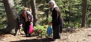 Her yerde onu arıyorlar: Kilosu 100 TL Adana'nın Feke ve Kozan ilçelerinde katran ağacı dibinde yılın sadece sonbahar ayında yağışlardan sonra görülen sedir mantarı köylülerin ek gelir kaynağı oldu Kilosu 80 ila 100 TL arasında alıcı bulan sedir mantarı Adana'daki fabrikalar aracılığı ile Japonya ve Güney Kore'ye ihraç ediliyor