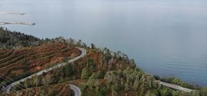 """3 yıl önceki yangında büyük zarar gören Çamburnu Sarıçam Ormanları'nın geleceği kurtarıldı Yanan ağaçların yerine dikilen fidanlar boy vermeye başladı Dünyada sarıçam ormanlarının deniz seviyesine inebildiği nadir alanlardan olan Çamburnu Tabiat Parkı'nda çıkan yangında zarar gören sarıçam ağaçlarının yerine dikilen fidanlar 30-40 santimetreye ulaştı KTÜ Orman Fakültesi Orman Mühendisliği Bölümü Öğretim Üyesi Prof. Dr. İbrahim Turna: """"Yanan saha başarılı bir şekilde ağaçlandırılmıştır"""" """"Çamburnu'nda şu an itibariyle boyları 30-40 santime ulaşan ağaçlar yüzde 90'ların üzerinde tutma başarısı göstermiştir"""""""