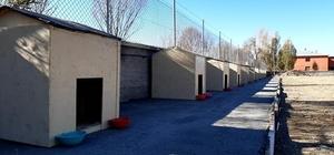 """İmranlı'da sokak hayvanları için barınak inşa edildi Sivas'ın İmranlı ilçesinde """"Sokak Değil, Sıcak Yuva"""" projesi kapsamında sokak hayvanları için barınak inşa edildi"""